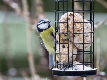 How to care for garden birds in winter